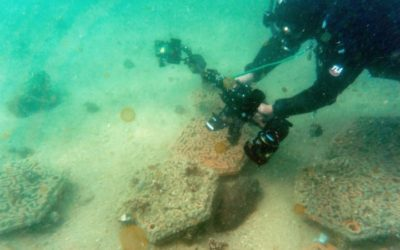 Hong Kong's Fragile Coral Reefs Boosted by 3D Printing
