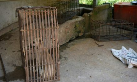 Cambodia's Tourist Hotspot Bans Dog Meat Trade
