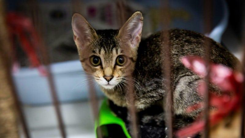 A Kitten at a Shelter in Hong Kong