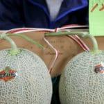 Japan Premium Melons Take Price Plunge