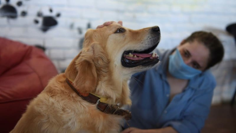 Adopting Dogs Through Pandemic