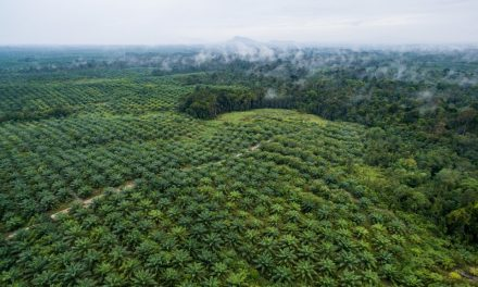 EU's Ban On Asia's Palm Oil Exports – What Could Go Wrong?