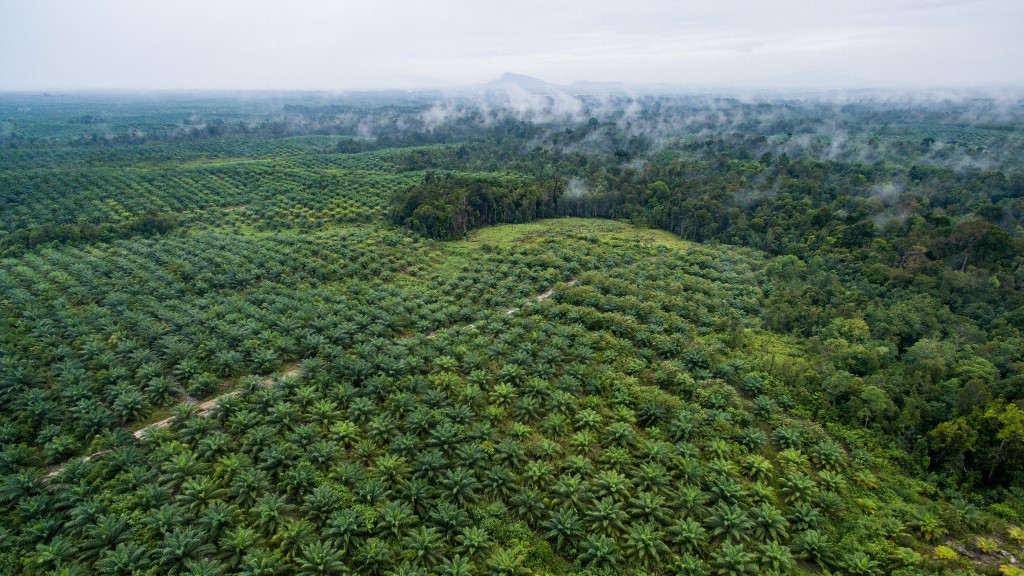 Aerial View of Oil Palm Plantation - Silat, Kalimantan Barat, Indonesia - CIFOR