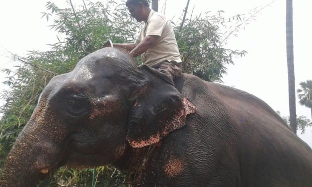 An Indian Landowner has Willed His Land to Two Elephants That Saved His Life