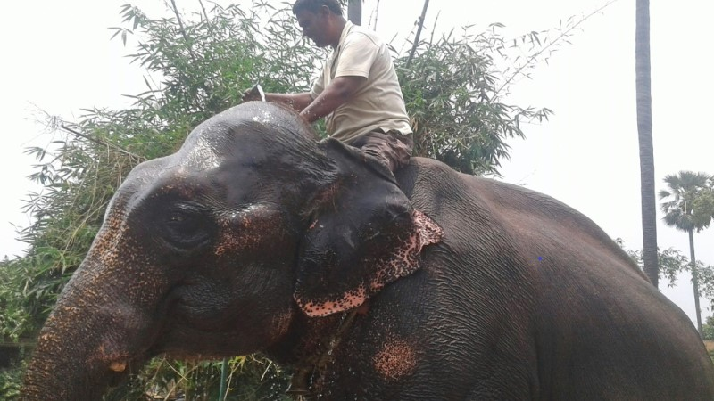 Akhtar Imam Bequeath 2.5 hectares to Elephants Moti and Rani.afp