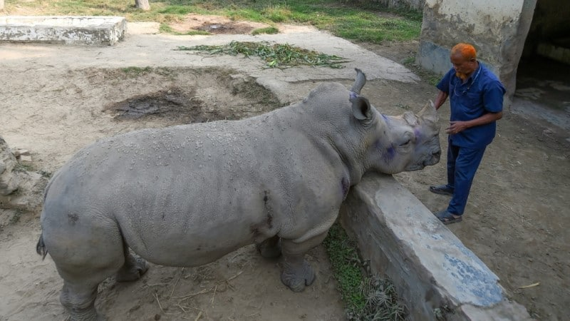 Alone Rhino in Bangladesh