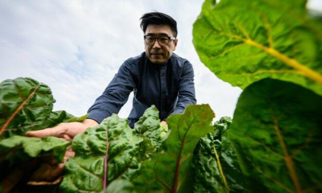 Hong Kong's Urban Farms Sprout Gardens in the Sky