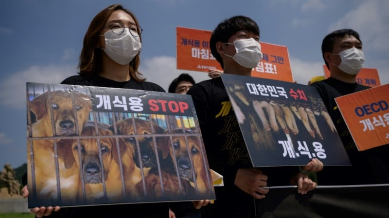 Anti dog meat protests in Korea