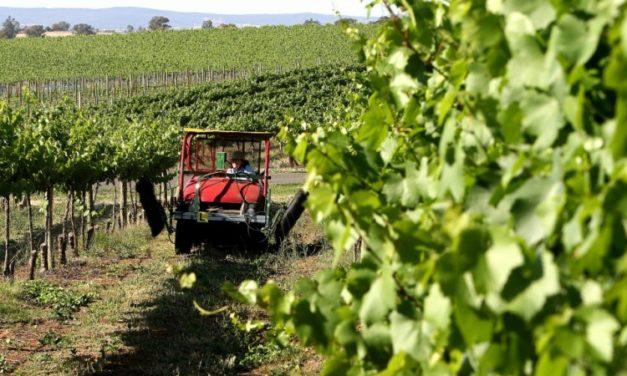 China Launches Anti-Dumping Investigation into Australian Wine