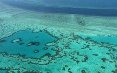 Australia to Take Ambassadors Snorkeling to Save Great Barrier Reef Status