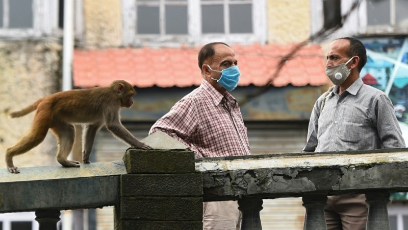 Authorities Struggled to Control Monkeys