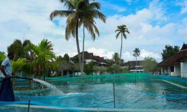 Luxury Resort in India Turned Swimming Pool into a Fish Farm