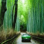 Amazing Bamboo Products You Can Add Now to Green Living