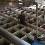 China's Rat, Cobra Farmers Feel Coronavirus Pain
