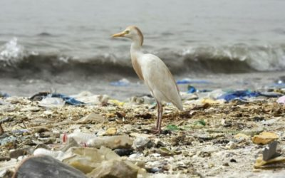 NGO Found Bags and Balloons Waste Most Responsible for Entanglement Incidents