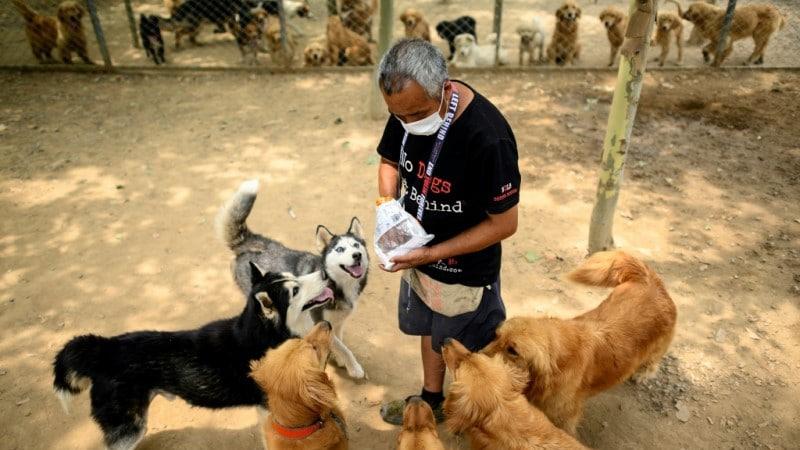 Beijing Dog Shelter to Rescued Animals.afp