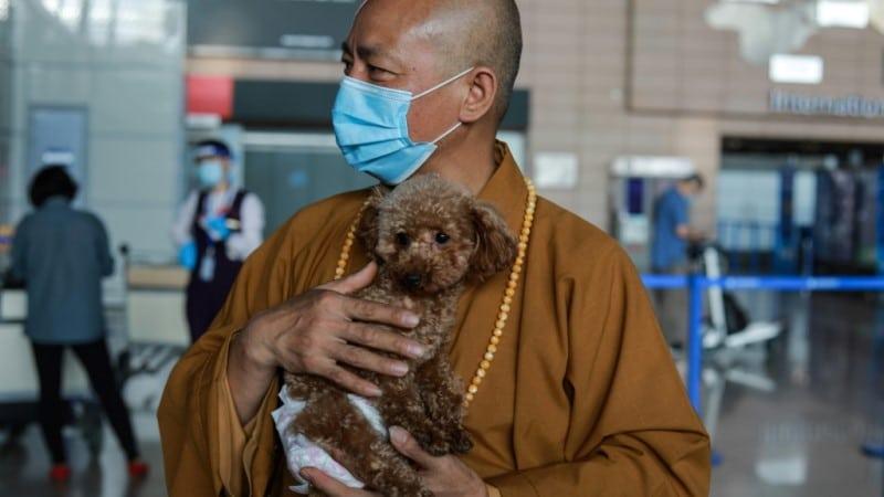 Buddhist Monk Animal Rescuer