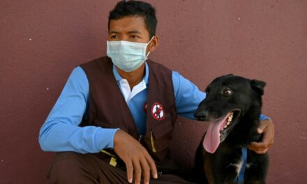 From Mines to COVID: Cambodia Dogs Train to Sniff out Virus