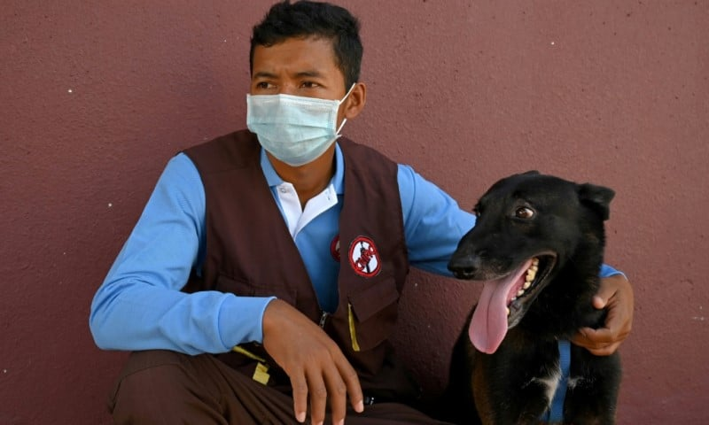 Cambodia dogs for Covid detection