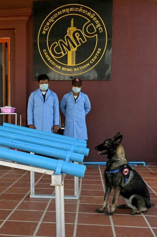 Cambodia dogs on training