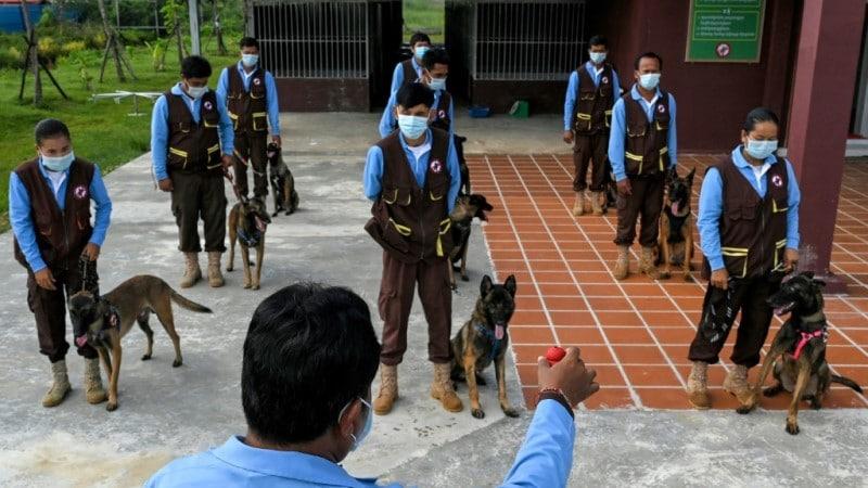 Cambodia dogs