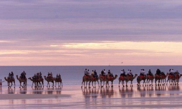 Forgotten Australian History Showcased in Camel Adventure Pic