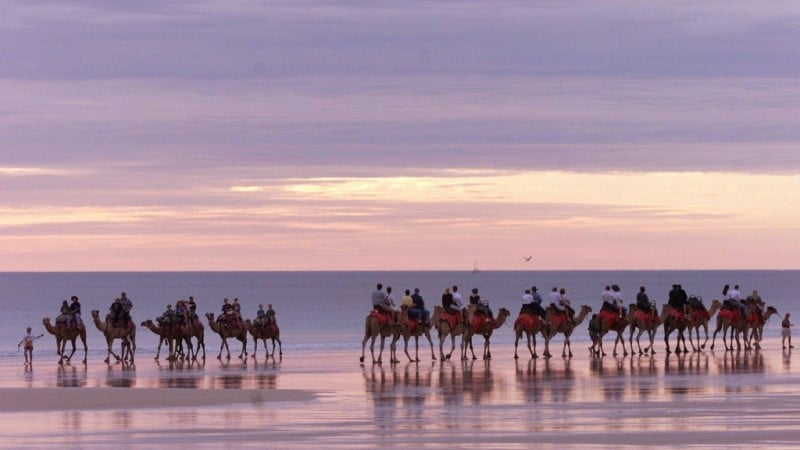 Camels Tourist Attraction in Australia
