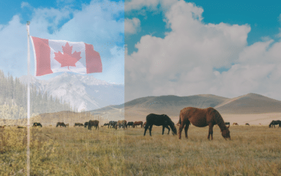Canadians Oppose Inhumane Export of Horses to Japan