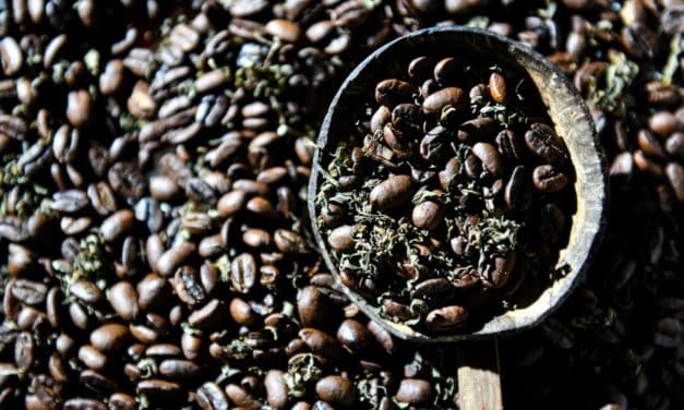 Cannabis Coffee: The Contraband Brew Is a Hit in Indonesia's Aceh Province