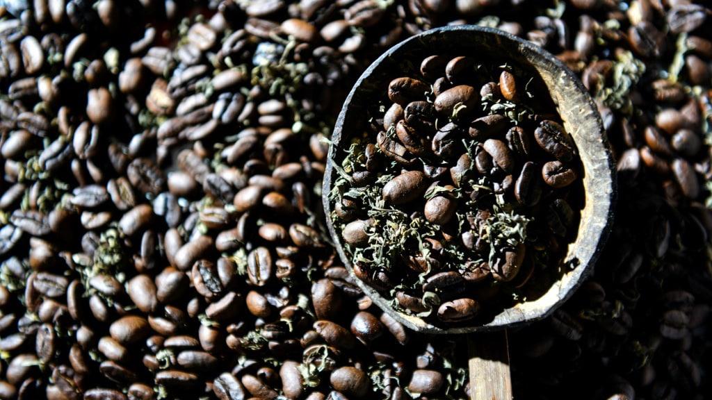 Cannabis Coffee Indonesia.afp