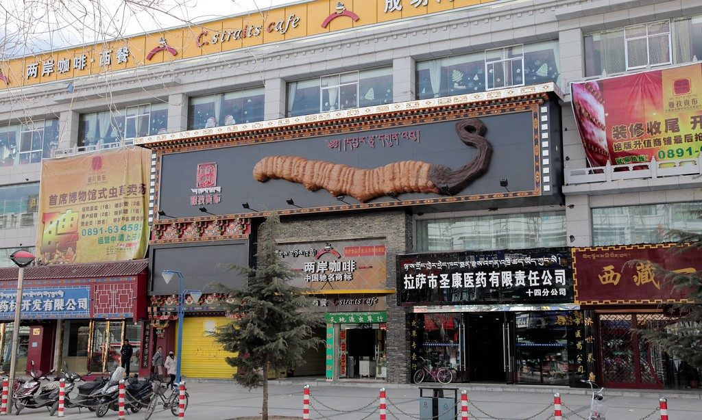 Caterpillar Fungus Store - Central Lhasa