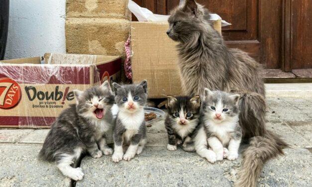 Feline Generous: Japan Cat Lovers Give $2 Million to Kidney Research