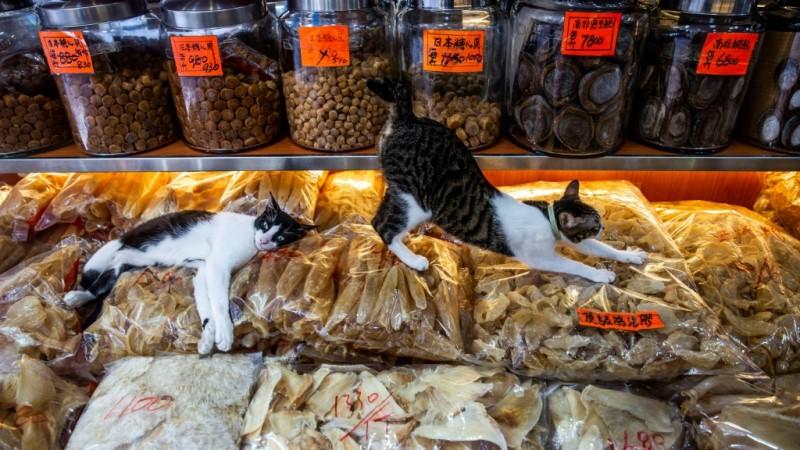 Cats at a Seafood Shop in Hong Kong