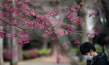 Scrapping Japan Cherry Blossom 'Like Taking Hugs Away From Italians'
