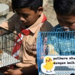 Indonesia: Kids Given Baby Chicks to Wean Off Smartphones