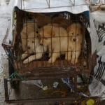Animal Rights Group Welcomes the End of China Dog Meat Trade