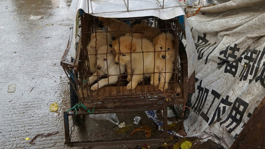 China's Dog Meat Trade.afp