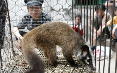 China Ordered a Temporary Ban on Wild Animal Trade