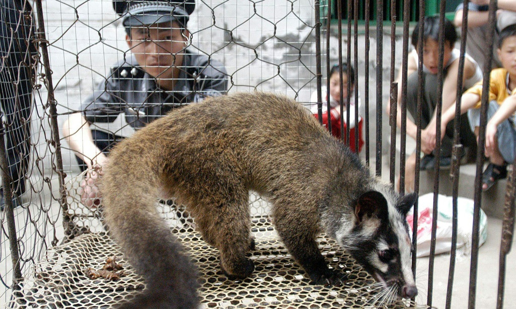 Civet Captured in Wuhan China.afp