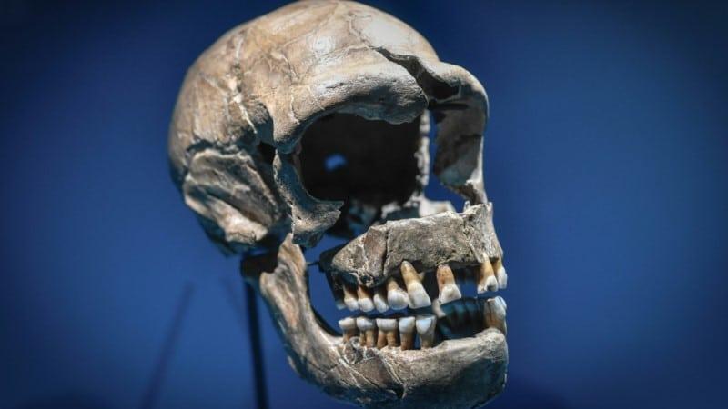 Covid-19 on Neanderthals