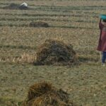 Manure Hunt Underway after India Thieves Steal Cow Dung