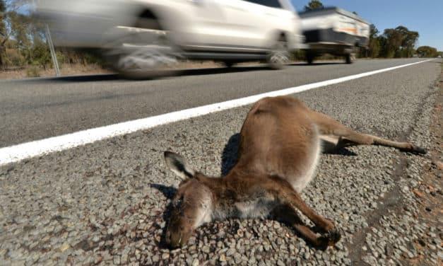 Australian Teen Charged with Hit and Run 'Kangaroos Massacre'