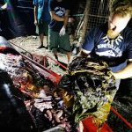 Young Whale Found Dead in the Philippines with 40 Kilos of Plastic