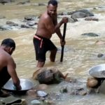 Indonesians Illegal Hunt for Gold in Desperate Times
