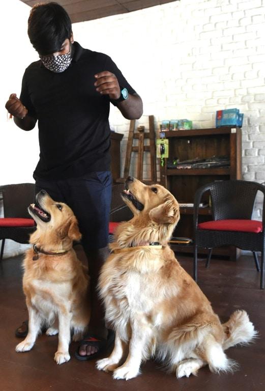 Dog Cafe in New Delhi