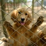 China Dog Meat Festival Goes Ahead but Virus Takes a Toll