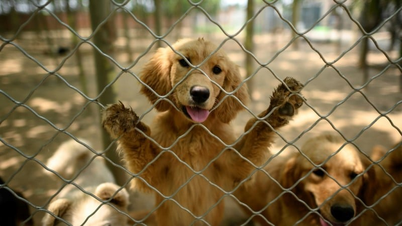 Dogs Reclassified as Companion Animals in China.afp