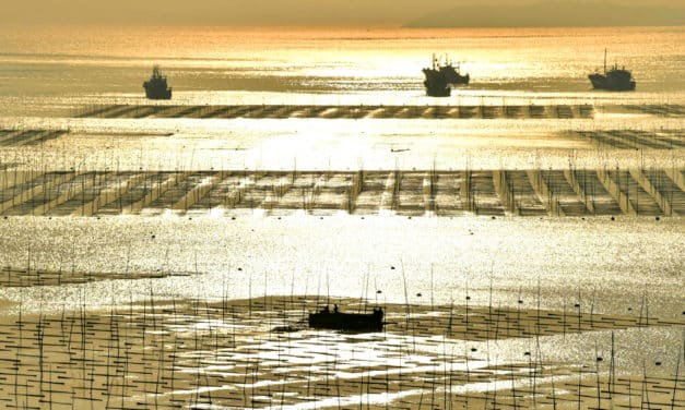 Xiapu: The Most Beautiful Coastal Mud Flats for Photography Enthusiasts