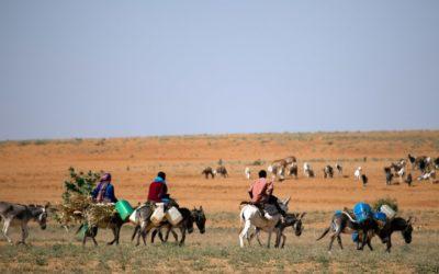 Why is China Buying up the World's Donkeys?
