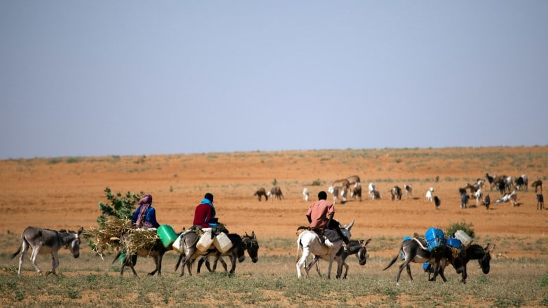 Donkey collected firewood and water - Darfur, Sudan @UNAMID